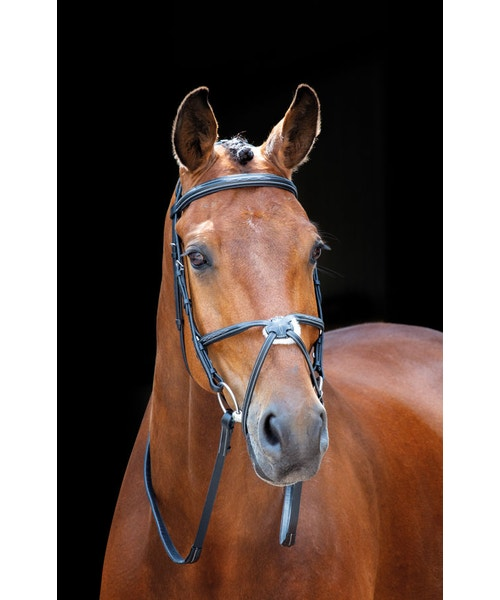 Shires Salisbury Brackley Bridle Black Cob